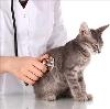 Ветеринарные клиники в Пестово